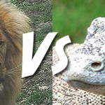 Who Would Win In a Fight Between a Lion and a Komodo dragon