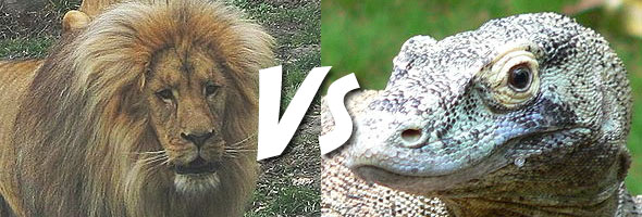 Komodo Dragon Vs Lion | www.pixshark.com - Images ...
